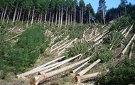 Help Restore the Forests