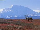 Tundra mountains