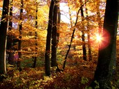 About Deciduous Forests