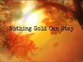 """""""Stay Gold"""""""