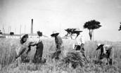 Agricultura de Castilla y León.