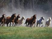 horses speed