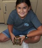 Hannah's Tortoise