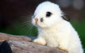 Bunny Farm