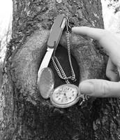 Boo Radley's Tree