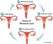 Menstrustion stage