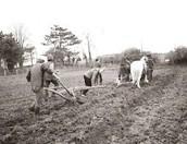 Farming Acres KN
