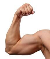 Tims biceps
