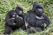 Animals Found in Asia
