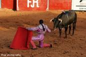 Bull Fighting, Texas