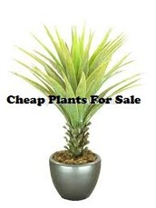 On the internet stores have wonderful Indoor Plants for Delivery Anywhere