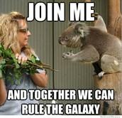 awesome koala meme!