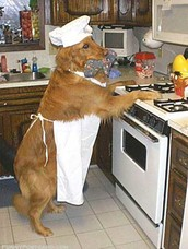When is Go Cook for Your Pet Day