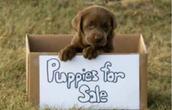 #Buy me.