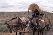 A Pioneer Traveling The Trail