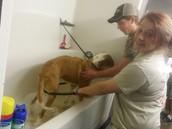 Scrubbin' the Dogs!
