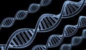 Molecular or Gene Cloning