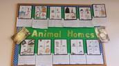 Animal Home Webs and Writing!