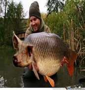 The big Pig fish