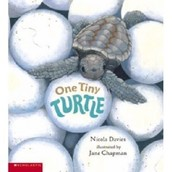 """One Tiny Turtle"" by: Nicola Davies"