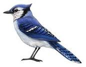 אל הציפור