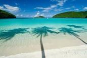 Maho Beach Palm Tree Shadow