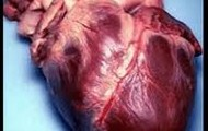 This Is An Actual Heart