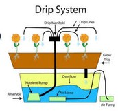 The Drip System