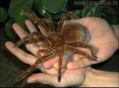 https://rustygarnersmith.wordpress.com/tag/spruce-fir-moss-spider/