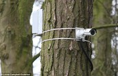 Cameras in trees to make sure students stay on task and find out if someone gets hurt ASAP