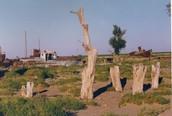 Dor deel van Aralmeer