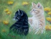 Frisky Kitties