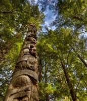 Cedar Trees (Totem Pole)