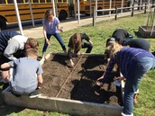 Early spring planting is underway in the SPMS garden