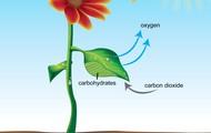 Cardon Dioxide
