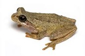 How are frogs adapted to live in their habitat?
