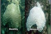 Bleaching vs normal