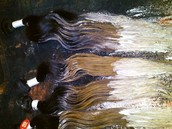 Black to Blonde Ombre Bleaching