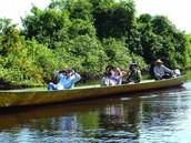 Amazon rainforest Trips