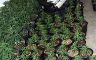 Marijuana Plant Form