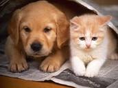 Los perros son más bonitas que los gatos.