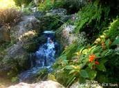 Andromeda Garden
