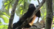 Visit Ometepe Island