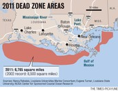 7.   What are Dead Zones in the Gulf of Mexico?  What causes this situation? What can be done to help stop them?