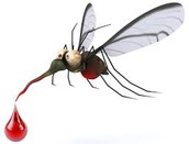 mosquito . someone can  get malaria by..