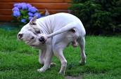 Wat is het precies en waarom doet een hond het?