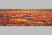 Ukkusiksalik National Park Nunavut Canada
