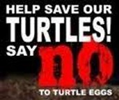 Say No To Turtle Eggs
