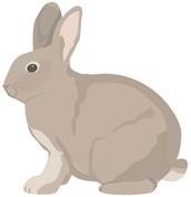 FREE Rabbit Clinic - Oct 15