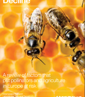 Research on the Decline of Bees